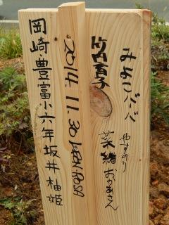 ゆうちゃんの桜 (4)